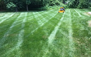 Lawn Care Mechanicsville And Hanover County VA